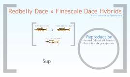 Redbelly Dace x Finescale Dace Hybrids