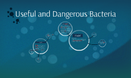 Copy of Useful and Dangerous Bacteria