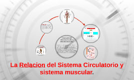 Copy of La Relacion del Sistema Circulatorio y sistema muscular.