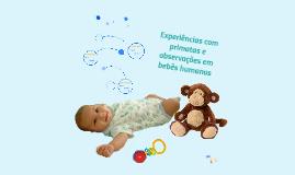 Experiências com primatas e observações em bebés humanos