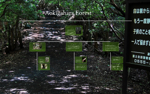Aokigahara Forest by Olivia Moraghan on Prezi