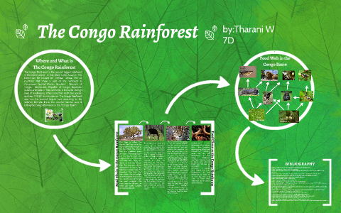 The Congo Rainforest By Tharani W