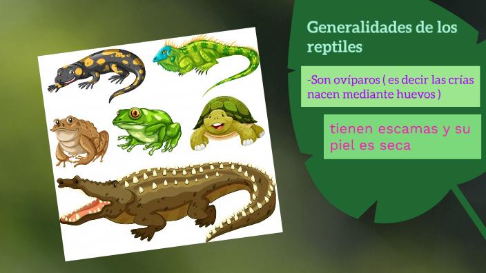 Excreción en reptiles by Juan David Mora Guerrero