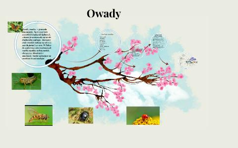 Owady Insekty Insecta Gromada Stawonogów Najliczniejsz By