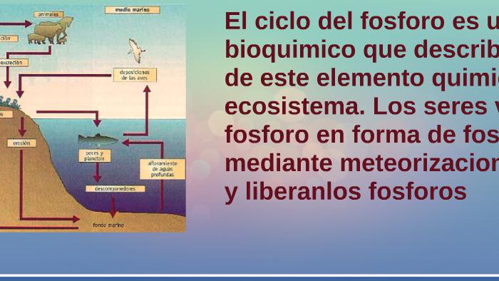 Ciclo Del Fosforo By Ara Beta On Prezi Next