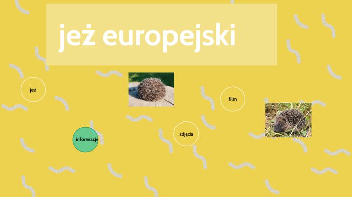 Jeż Europejski By Emilka Gajewska On Prezi Next