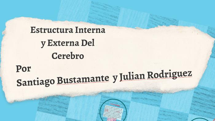 Estructura Interna Y Externa Del Cerebro By Advil Gripa On Prezi