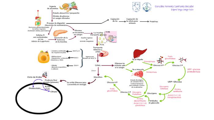 Metabolismo secundario de plantas