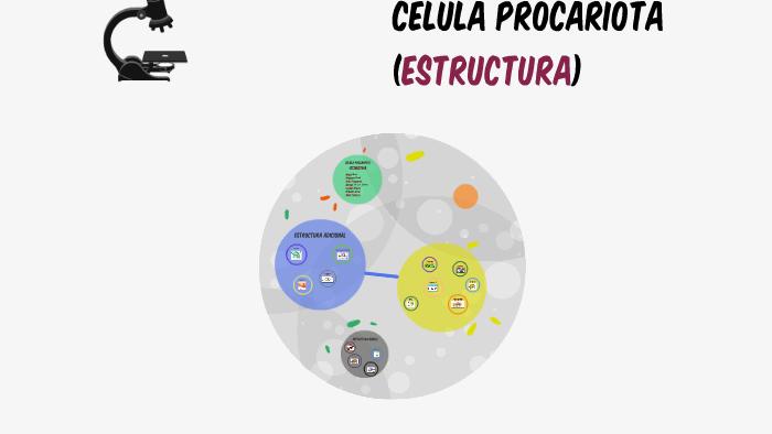 Célula Procariota Estructura By Acxel Coporan Lopez On Prezi