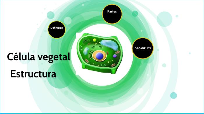 Célula Vegetal By Kelly Ramirez On Prezi Next