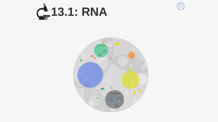 13.1: RNA by Rachel Mullin on Prezi
