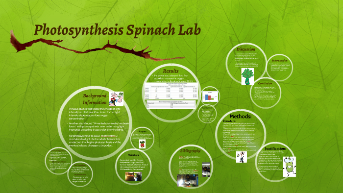 spinach photosynthesis lab