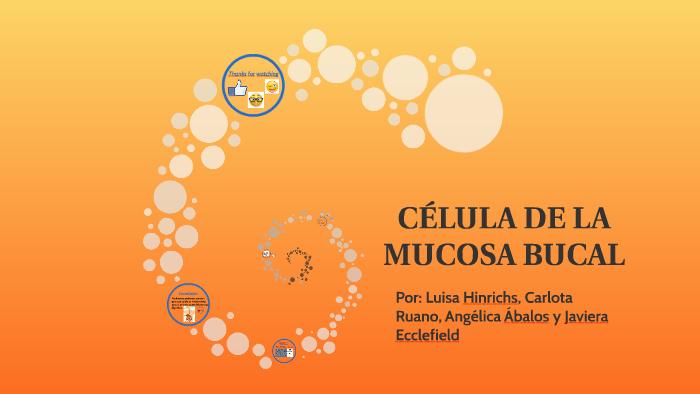 Célula De La Mucosa Bucal By Javiera Ecclefield On Prezi