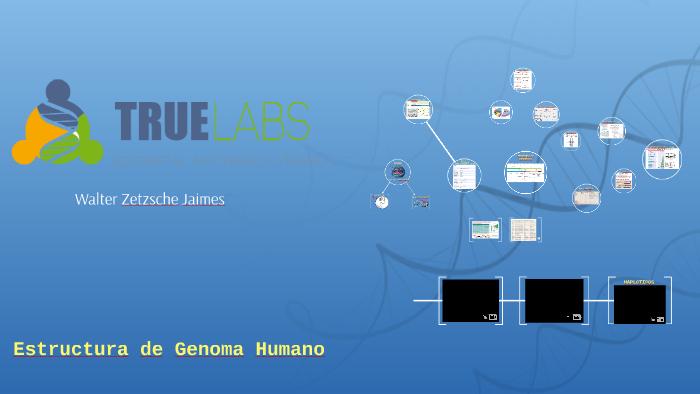 Estructura De Genoma Humano By Walter Zetzsche On Prezi
