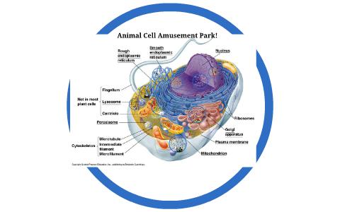 Animal Cell Amusement Park By Steve Stevenson On Prezi