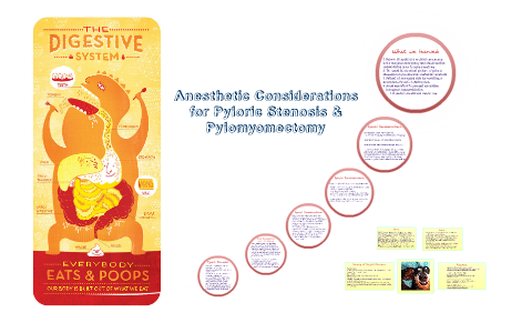 Anesthetic Considerations For Pyloric Stenosis Pylomyomect By