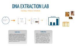 Bio Lab Report By Lexy Mason
