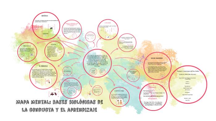 Mapa Mental Bases Biológicas De La Conducta Y El