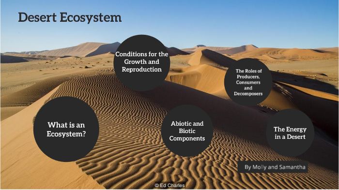 desert ecosystem producers consumers and decomposers