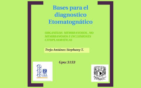 Bases Para El Diagnostico Etomatognático By Stephany Antúnez