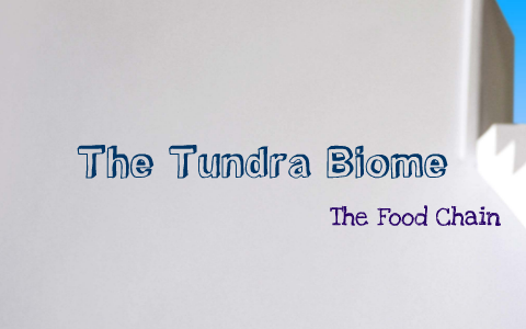 Food Chain Of The Tundra Biome By Brooke Casias On Prezi