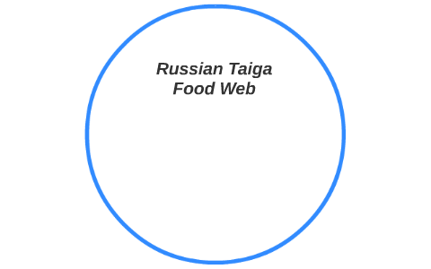 russian taiga food web by jack stumberg on prezi