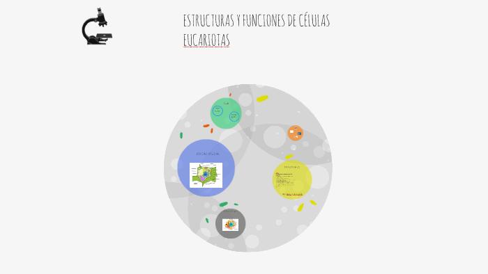 Estructuras Y Funciones De Células Eucariotas By Ampi