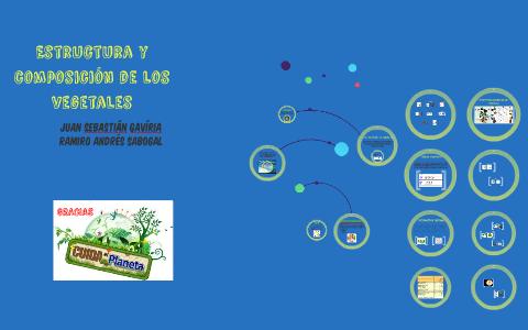 Estructura Y Composicion De Los Vegetales By Juan Sebastian