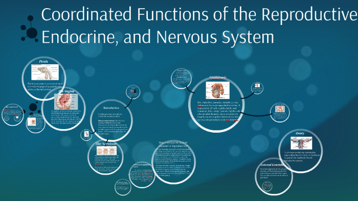 Coordinated Functions of the Reproductive, Endocrine, and Ne by ...