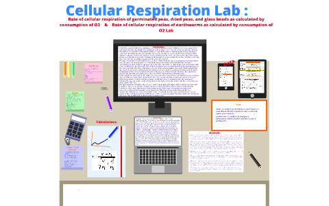 germinating peas cellular respiration lab