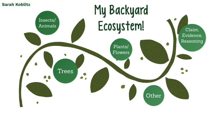 My Backyard Ecosystem- Sarah Koblitz by sarah koblitz on ...
