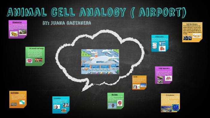 Animal Cell Analogy Airport By Juana Castañeda On Prezi