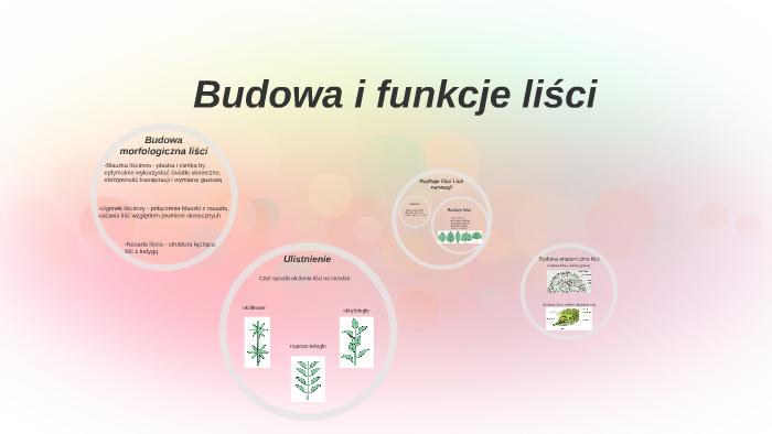 Budowa I Funkcje Lisci By Matylda Tokarska On Prezi