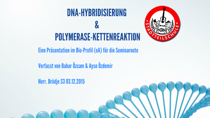 Dna Hybridisierung Polymerasekettenreaktion By Bahar ö On Prezi