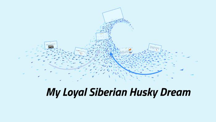 Siberian Husky By Aliyah Cotton On Prezi