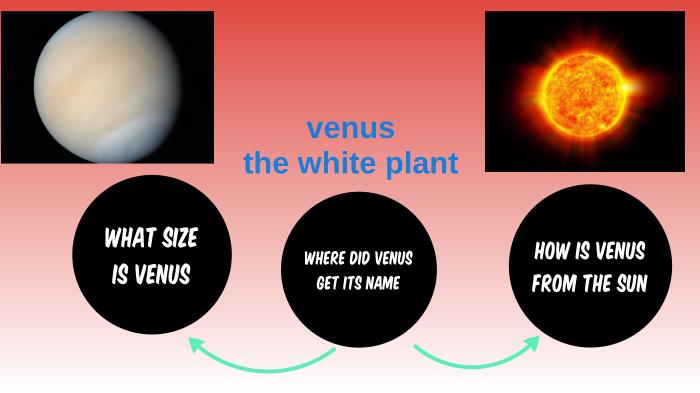 where did venus get its name