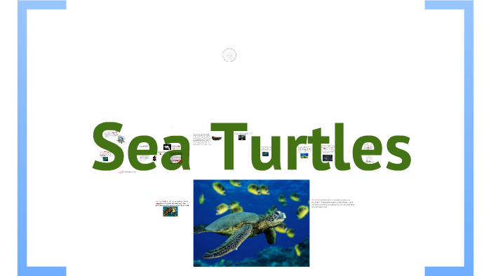 Sea Turtles by Lindsay Connor on Prezi