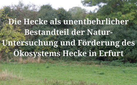 Untersuchung Und Förderung Des ökosystems Hecke In Erfurt By Luna