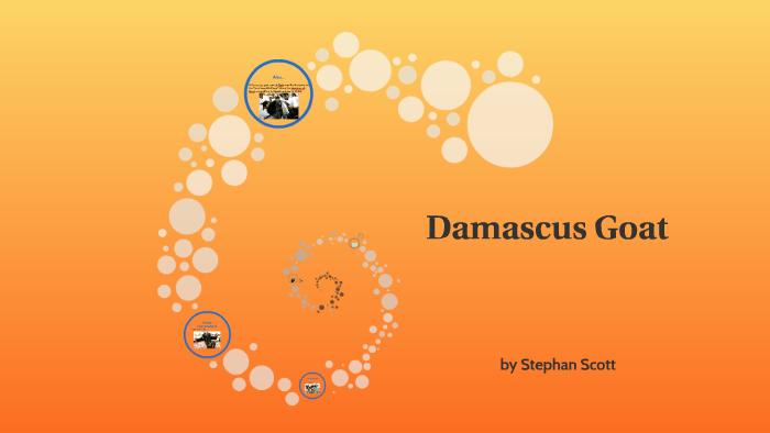 Damascus Goat by stephan scott on Prezi
