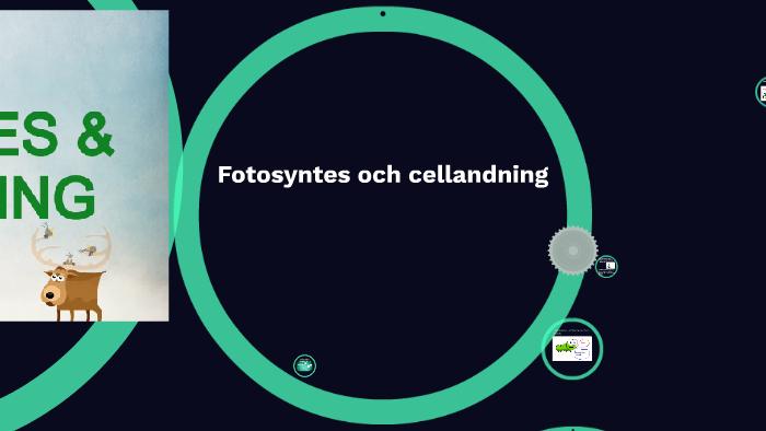 fotosyntes och cellandning