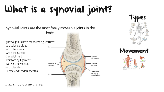 Synovial Joints Assessment 3 by Rhiannon Saunders on Prezi Next