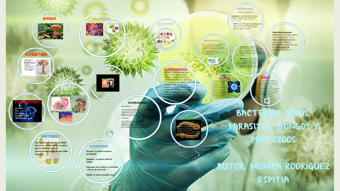 diferencias entre bacterias levadura parásitos animales