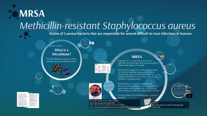 The Microbiome and MRSA by Rebecca Sky on Prezi