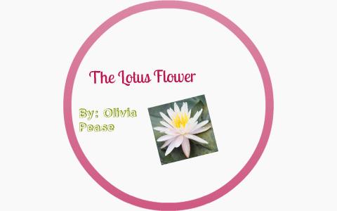 The Lotus Flower By Olivia P On Prezi