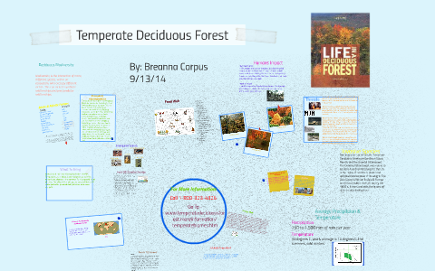 Temperate Deciduous Forest By Breanna Corpus On Prezi