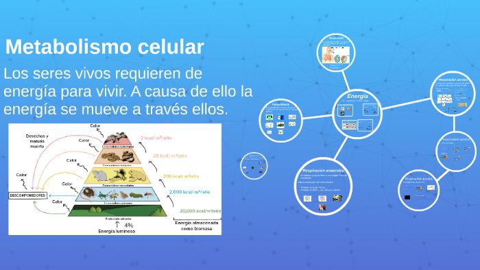 2.9 Metabolismo celular by on Prezi