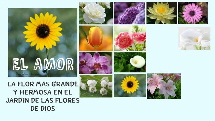 Flores hermosas by luz Gonzales Vilca on Prezi
