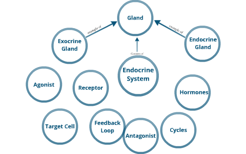 Hormone Concept Map.Endocrine System Concept Map By Kelsey Stimpfl On Prezi
