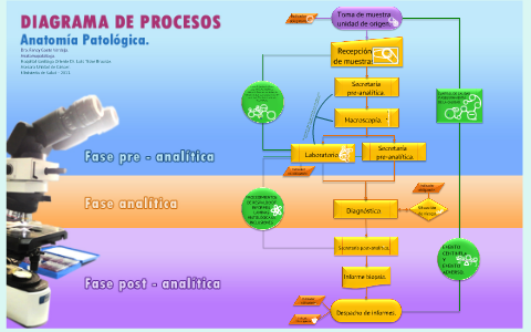 Diagrama De Procesos De La Unidad De Anatom 237 A Patol 243 Gica