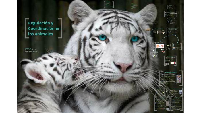 Regulación Y Coordinación En Los Animales By álvaro